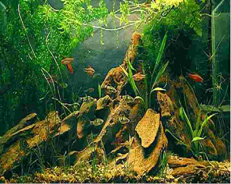 Волшебный аквариум